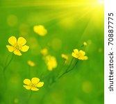 Yellow Wildflowers And Sun.