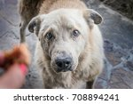 big homeless hungry dog with... | Shutterstock . vector #708894241