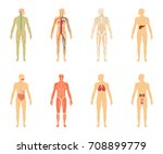 human anatomy. set of vector... | Shutterstock .eps vector #708899779