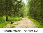 a path trough a forest in alps  ... | Shutterstock . vector #708926161