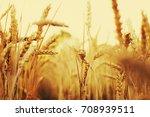 grain field closeup | Shutterstock . vector #708939511