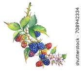 a branch with blackberry fruit  ... | Shutterstock . vector #708942334
