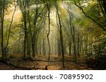 early morning sun in the woods... | Shutterstock . vector #70895902