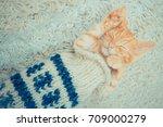 Stock photo little red kitten the kitten lies on the fluffy carpet at home little kitten sleeps close up of 709000279