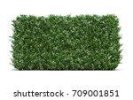 3d rendering of star jasmine | Shutterstock . vector #709001851