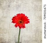 Small photo of african daisy (gerbera) on light gray background