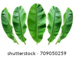 banana leaf isolated  background | Shutterstock . vector #709050259