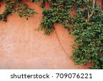 green abstract plant on an... | Shutterstock . vector #709076221