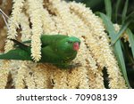 scaly breasted lorikeet ... | Shutterstock . vector #70908139