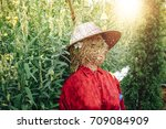 traditional red scarecrows in... | Shutterstock . vector #709084909