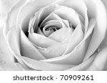 White Rose  Black And White...