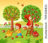 boy and girl collect fruit... | Shutterstock .eps vector #709106821