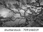 the big tree in  fine art | Shutterstock . vector #709146019