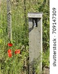 Small photo of Outside water tap on an allotment or community garden with poppies growing beside.