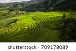 top view of the rice paddy... | Shutterstock . vector #709178089