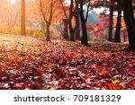 beautiful fallen colorful... | Shutterstock . vector #709181329