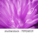 Detail of purple flower - stock photo