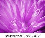 Detail Of Purple Flower