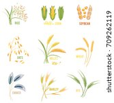 cereal plants vector icons... | Shutterstock .eps vector #709262119