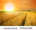 wheat field at the sunset | Shutterstock . vector #709281589