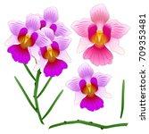 vanda miss joaquim orchid.... | Shutterstock .eps vector #709353481