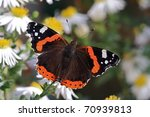 Butterfly Red Admiral  Vanessa...