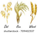 set of cereal plants   wheat ... | Shutterstock .eps vector #709402537