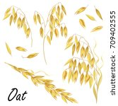 set of oat ears and seeds. hand ... | Shutterstock .eps vector #709402555