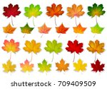 set with autumn leaves  vector... | Shutterstock .eps vector #709409509