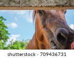 horses are eating food on a... | Shutterstock . vector #709436731