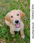 labrador retriever puppy need... | Shutterstock . vector #709437394