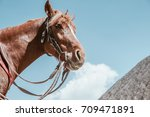horse on mount bromo volcano ... | Shutterstock . vector #709471891