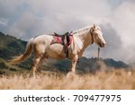 horse on savanna field at bromo ... | Shutterstock . vector #709477975
