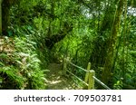 beautiful path inside of the...   Shutterstock . vector #709503781