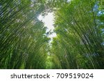 green bamboo tunnel | Shutterstock . vector #709519024