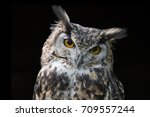 Portrait Of An Eagle Owl Very...