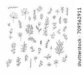 floral and herbal set. graphic... | Shutterstock .eps vector #709562911