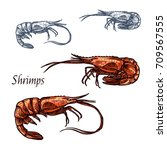 shrimp or prawn sketch. vector... | Shutterstock .eps vector #709567555