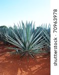 Lanscape Tequila Mexico 11