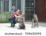 at a dog's home | Shutterstock . vector #709650595