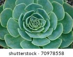 background of green plant...   Shutterstock . vector #70978558