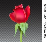 realistic rose bud with stem... | Shutterstock .eps vector #709810135