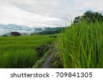 top view of the rice paddy... | Shutterstock . vector #709841305