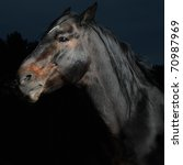 Closeup Portrait Black Horse I...