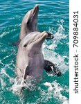 dolphins dancing in the... | Shutterstock . vector #709884031