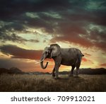 elephant with trunks and big... | Shutterstock . vector #709912021