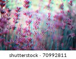 beautiful 3d anaglyph stereo... | Shutterstock . vector #70992811