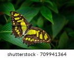 Butterfly In The Green Forest....
