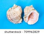 seashells on a blue background   Shutterstock . vector #709962829