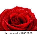 Red Wet Rose With Dew Drops...